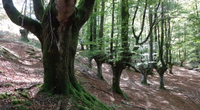 Myth1-basqueforest
